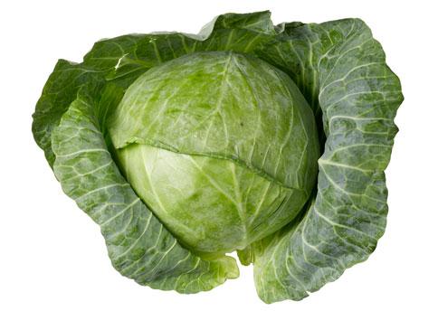 cabbage-plant